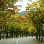 A Day at Seoul Grand Park – Meeting Seoul's seniors and little ones