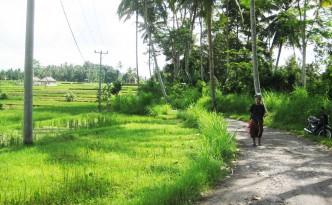 ubud bali sayan villages