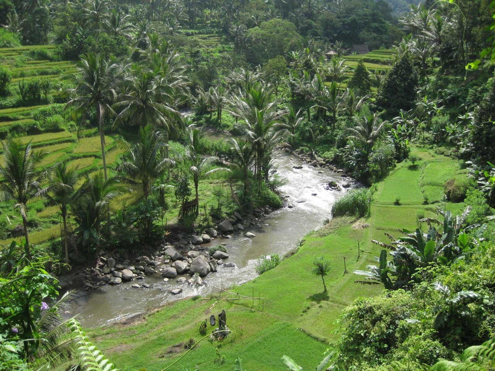 Trekking In Ubud Bali At Penestanan And Sayan Part 2