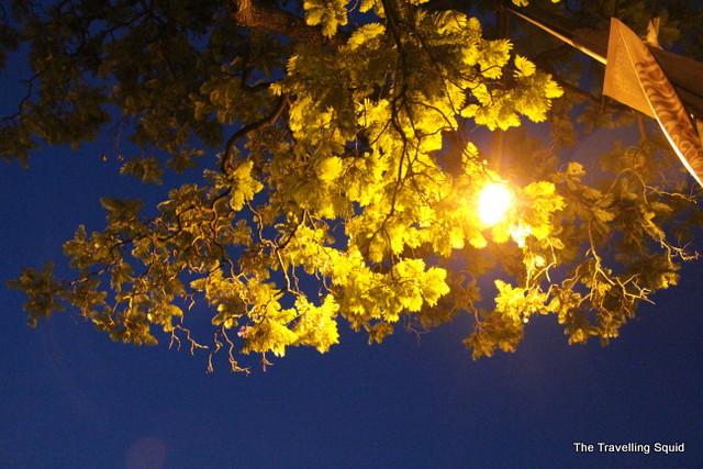 lisbon nightlife trees summer