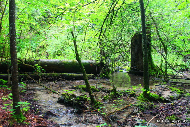 plitvice lakes green mosses sedimentation