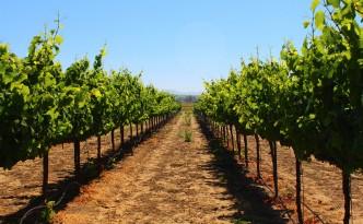 larson family winery green dream tours