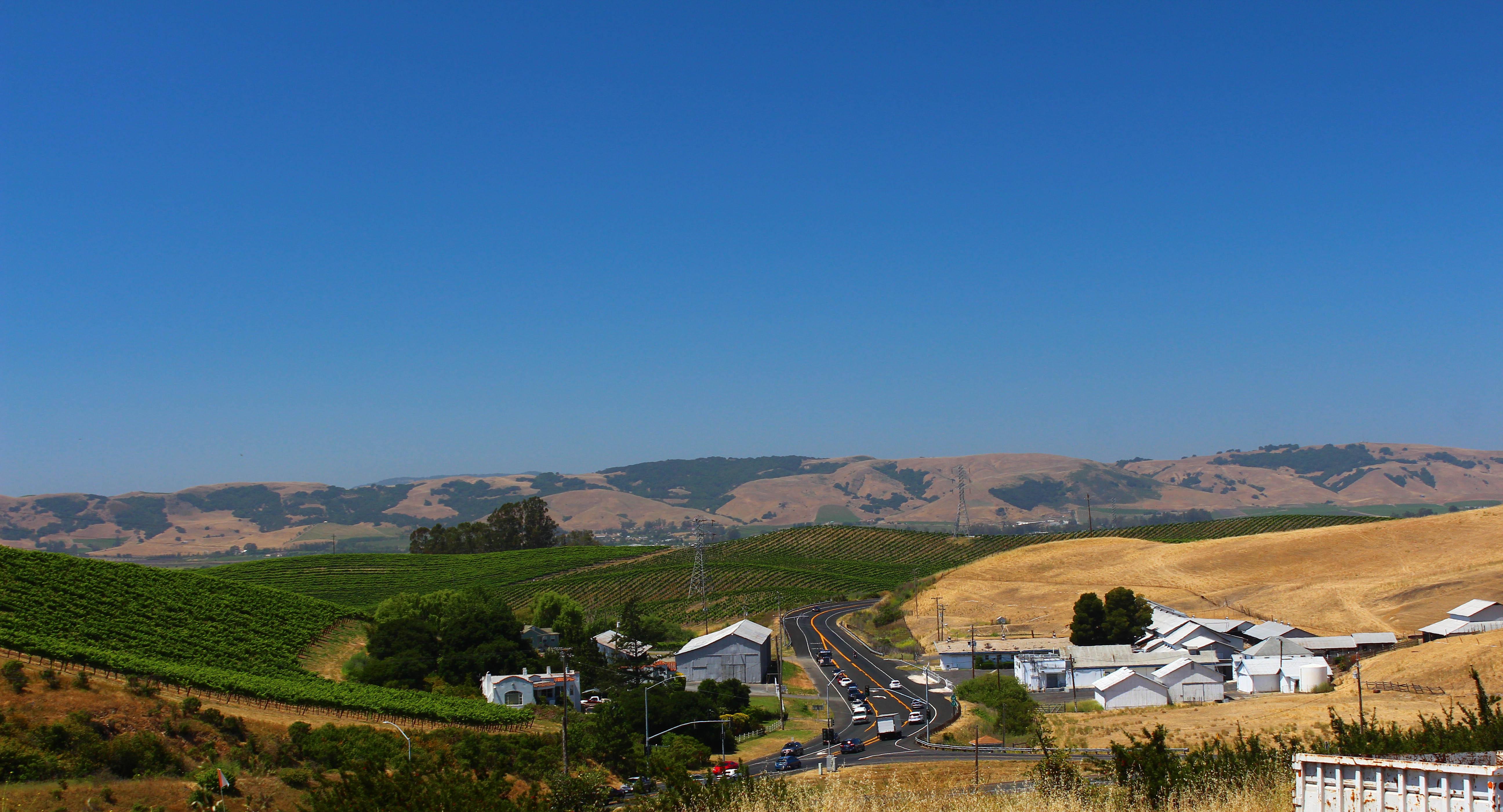 nicholson ranch california wine tour