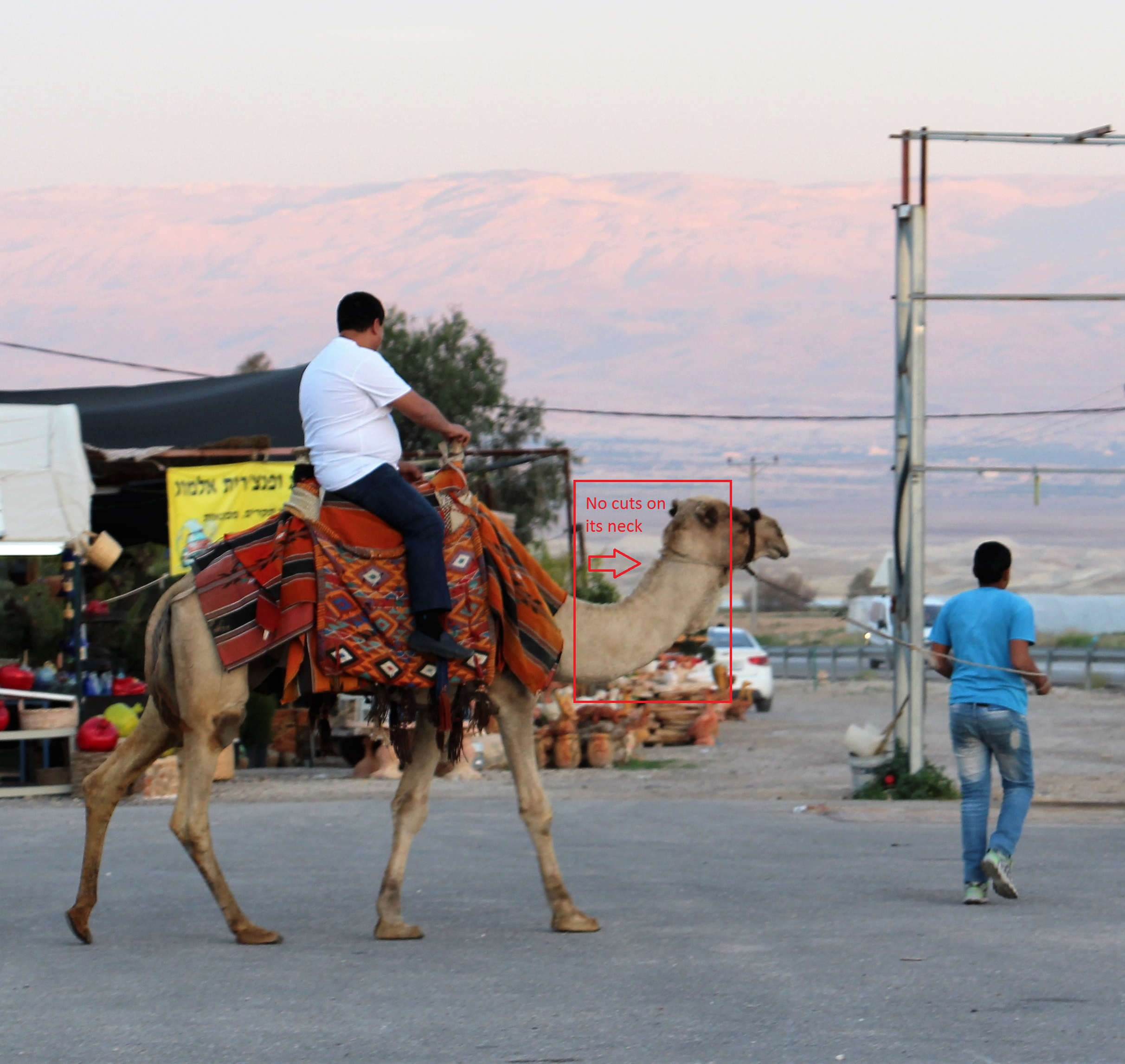 Israel camel ride jerusalem parking lot