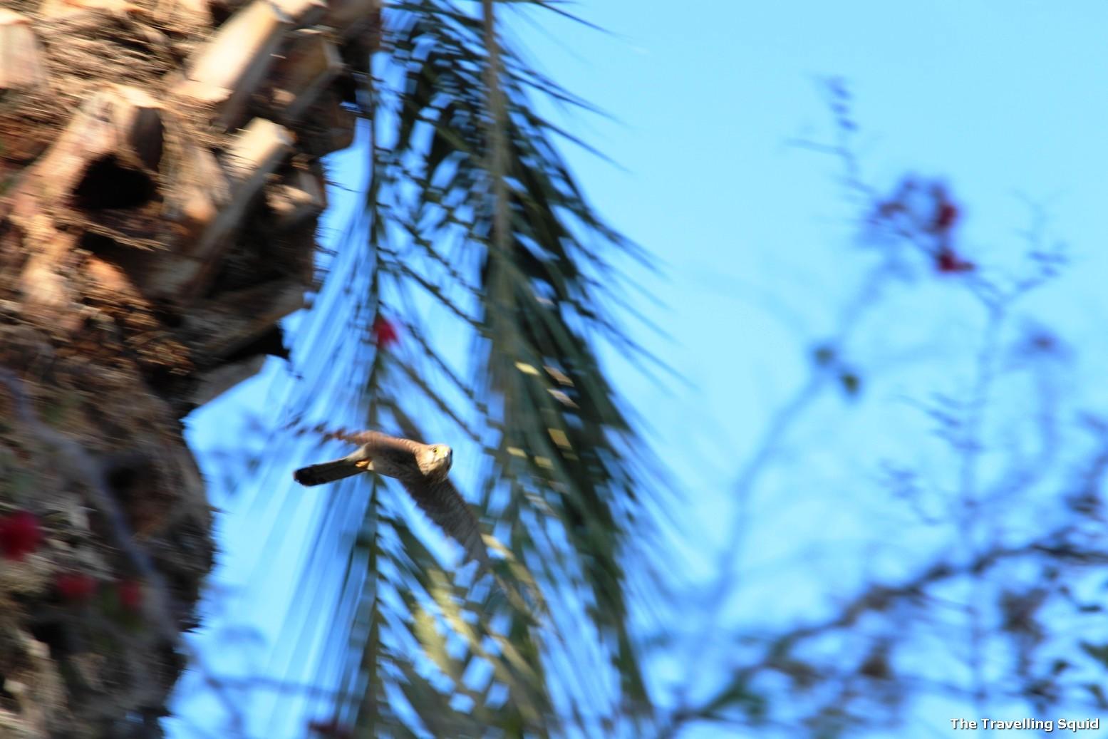 Mount of Beatitudes gardens bird