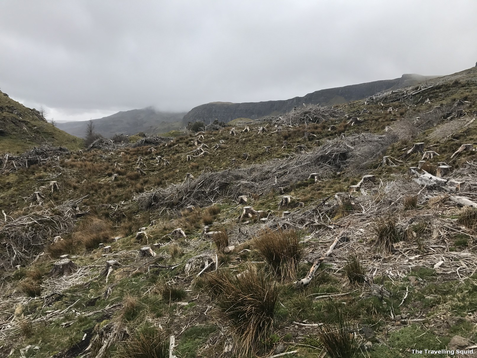 Felled trees at The Old Man of Storr