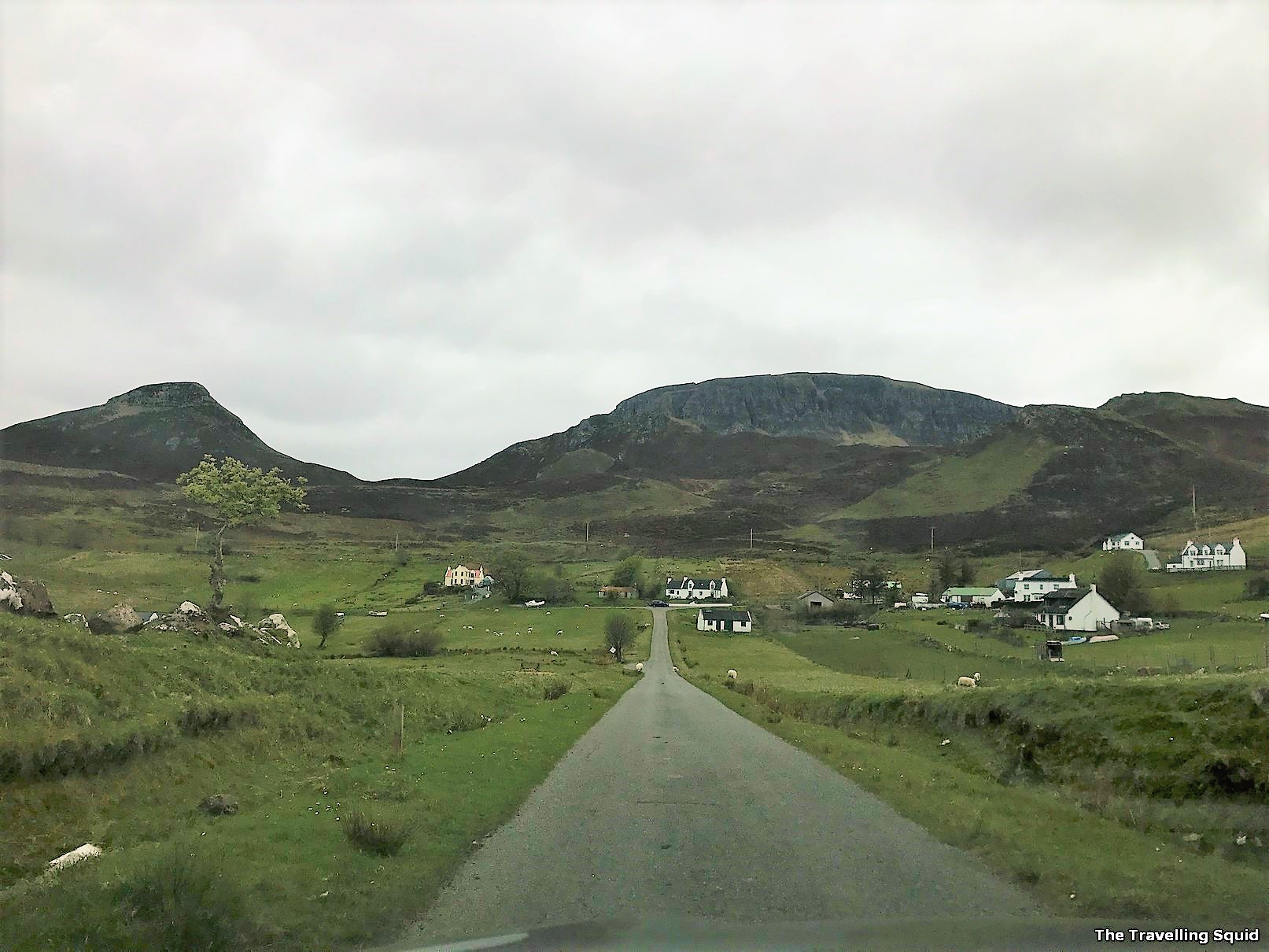 lambs scotland Quiraing isle of skye