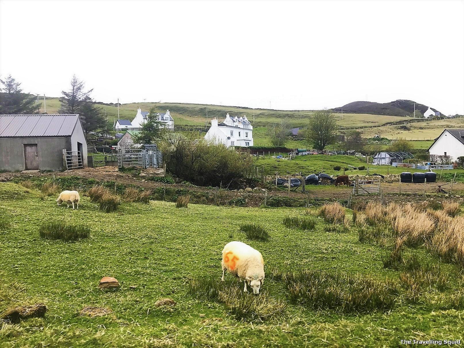 why I stopped eating lamb Quiraing isle of skye