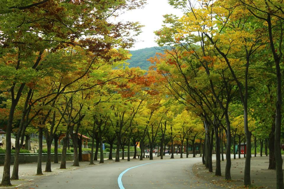 seoul grand park autumn