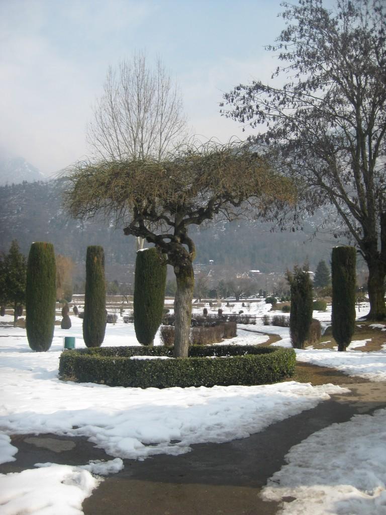 srinagar botanical gardens kashmir