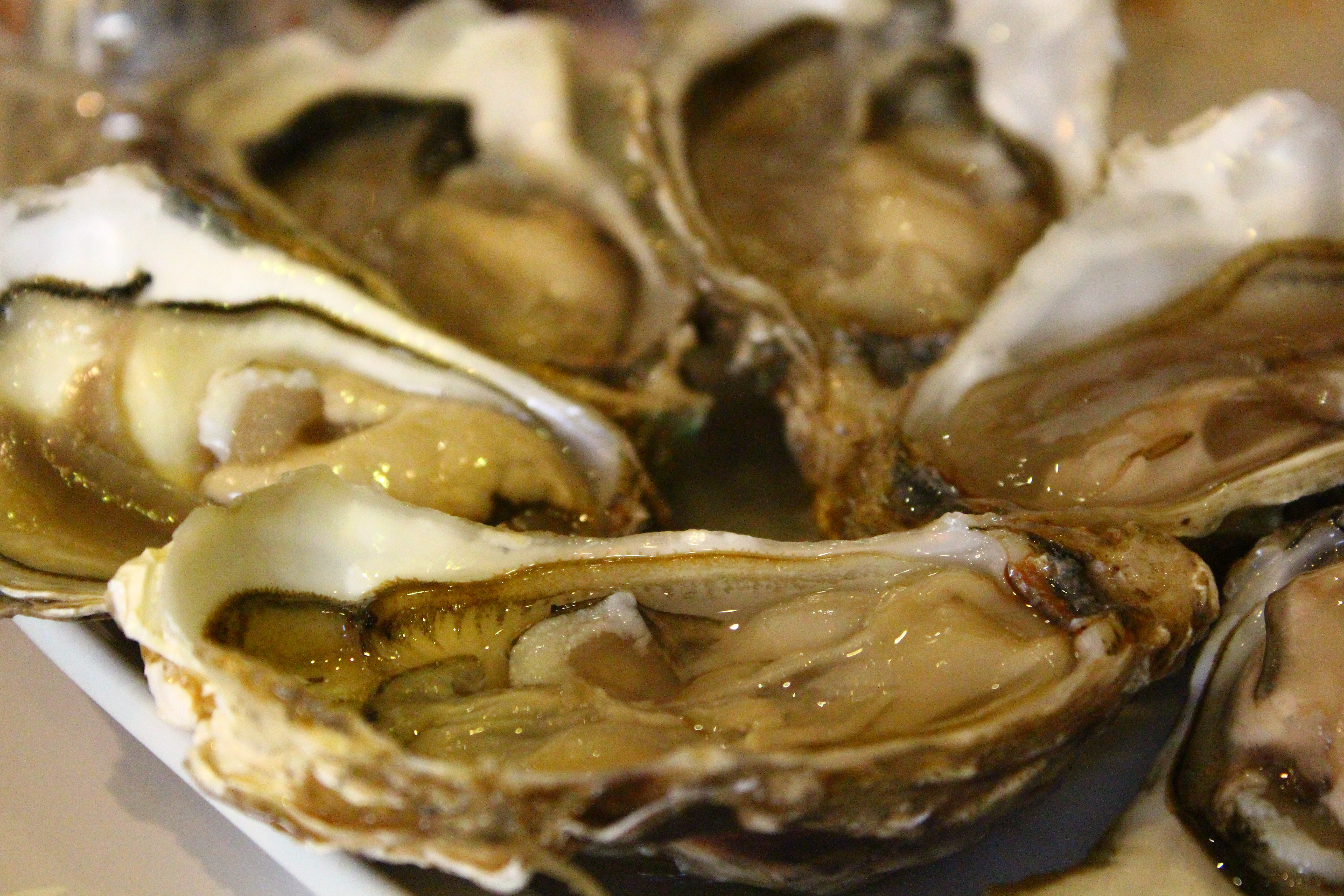 Oyster portugal good seafood lisbon