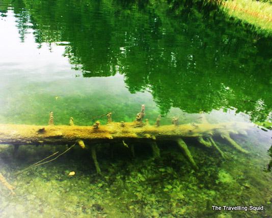 Plitvice lakes fallen tree trunk
