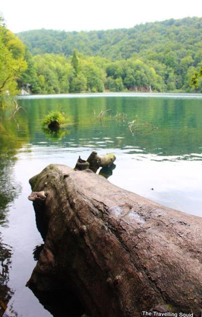 plitvice lakes fallen log