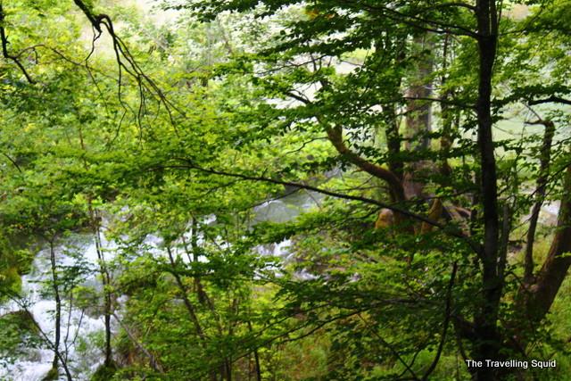 Plitvice Lakes treetop