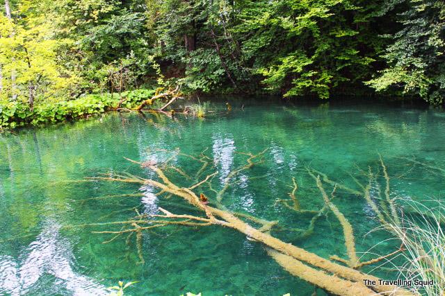 plitvice Lakes walking trails green water