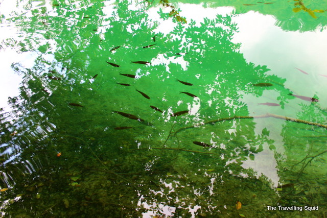 plitvice lakes fishes green water