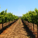 Review: Wine tour from San Francisco to Napa and Sonoma Valley with Green Dream Tours (Part 1)