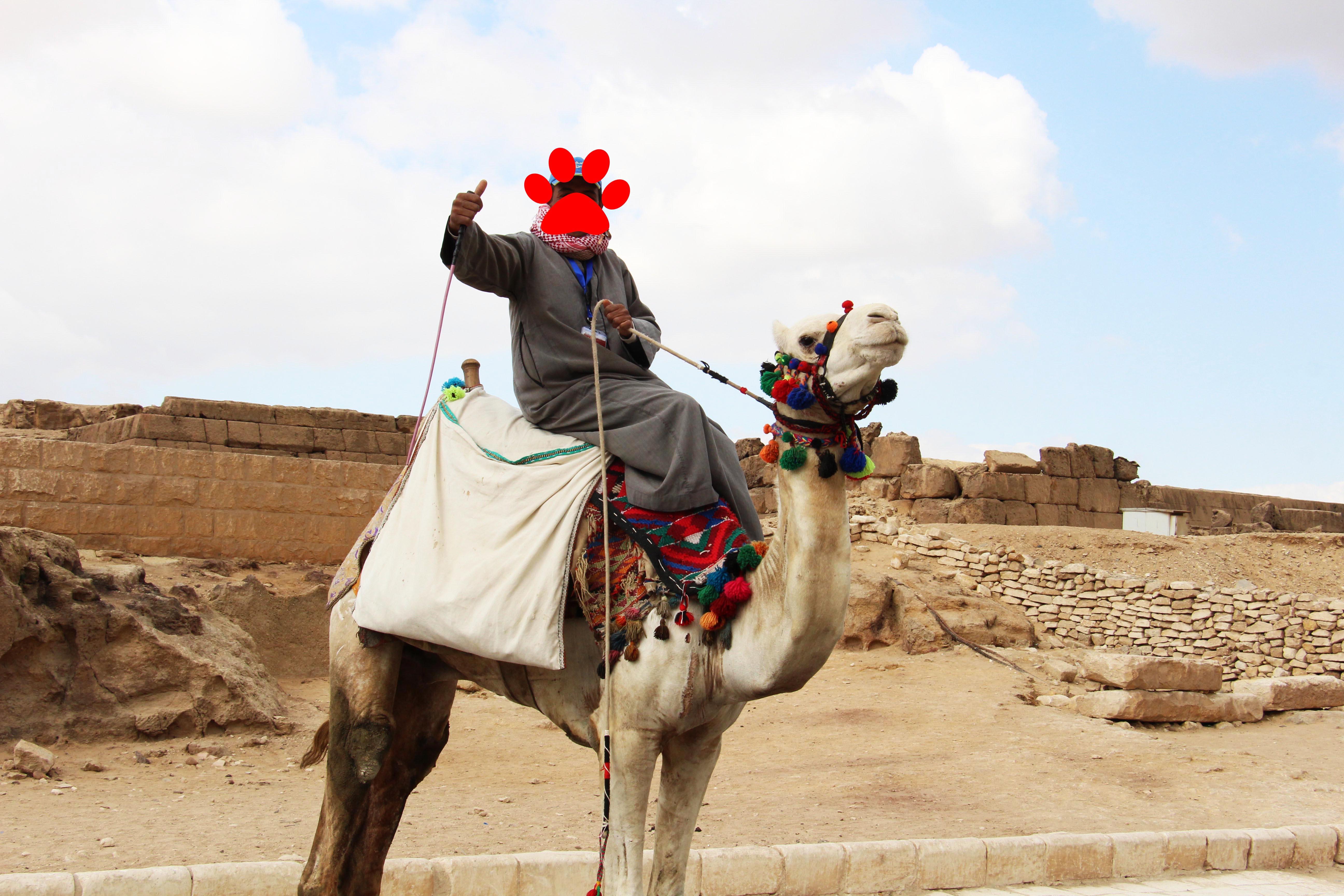 horrible camel driver egypt pyramids