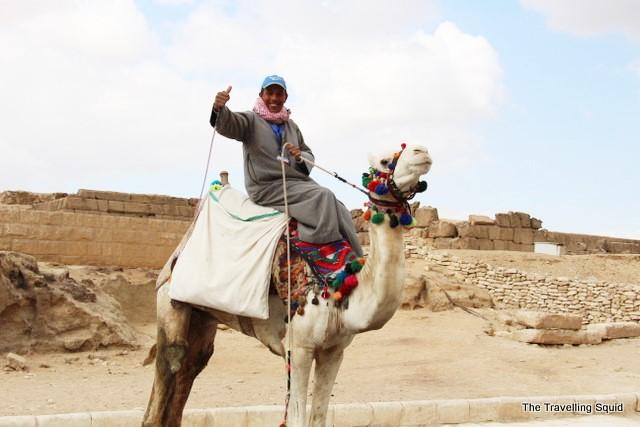 camel pyramids giza egypt scam