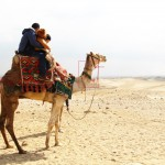 Ill treatment of camels at the Pyramids (Part 2)