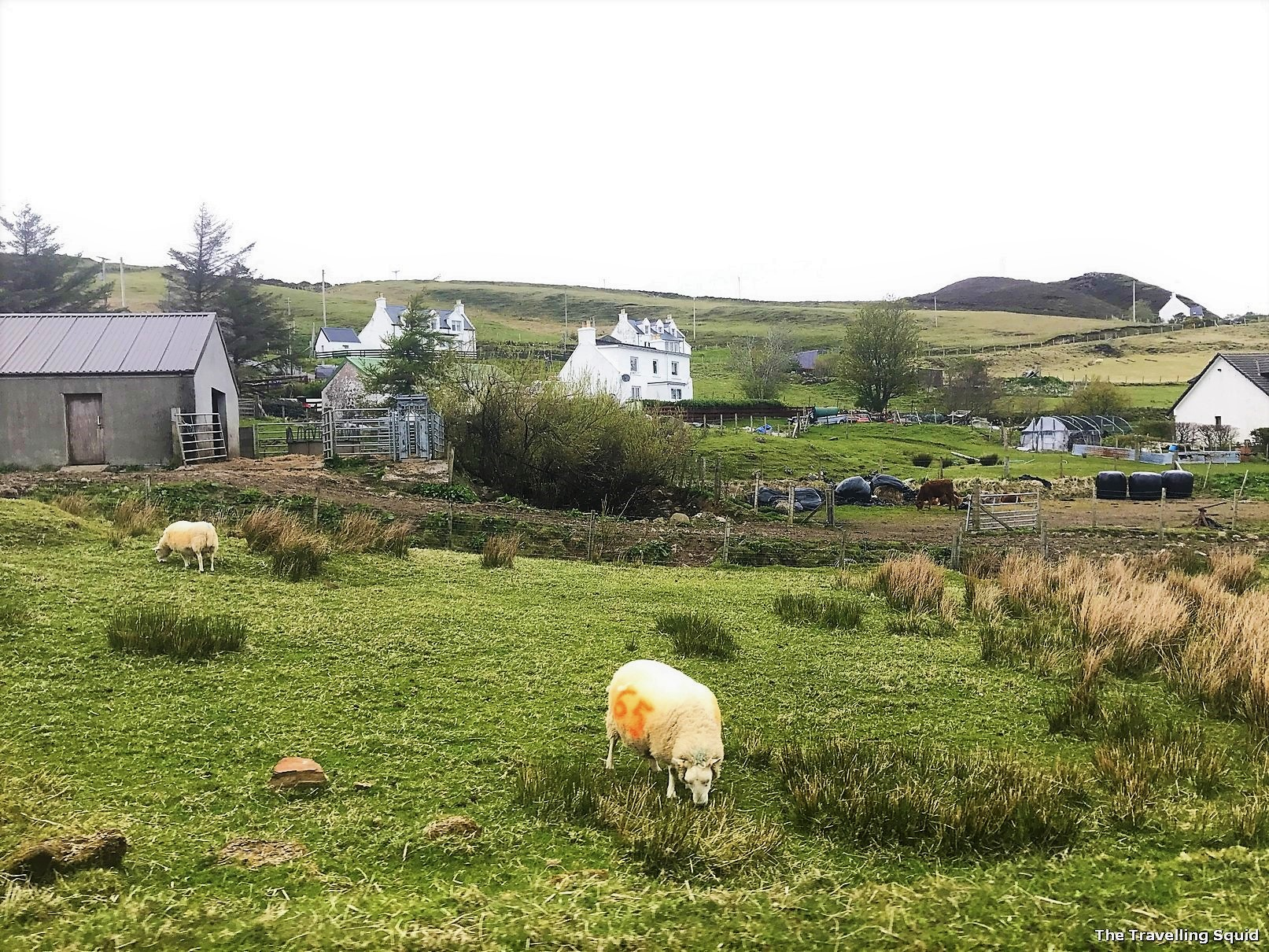 why I stopped eating lamb Quiraing isle of skye