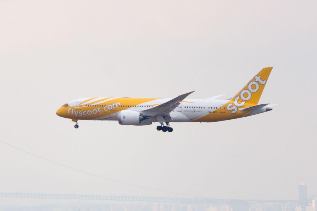 scoot aeroplane dreamliner