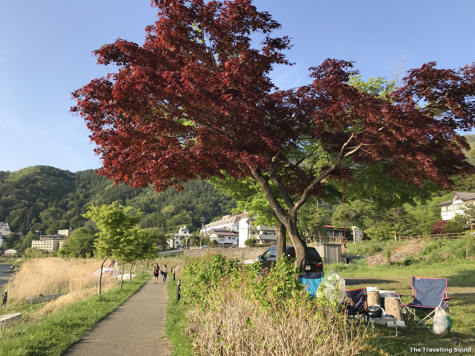 Walking Trail around Lake Kawaguchiko tree