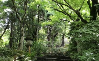 Maruyama Park kyoto Higashiyama