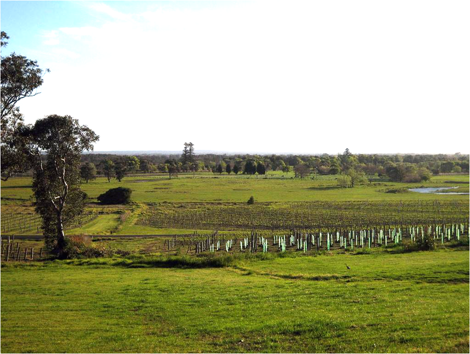 Vineyards in Coolangatta Estate