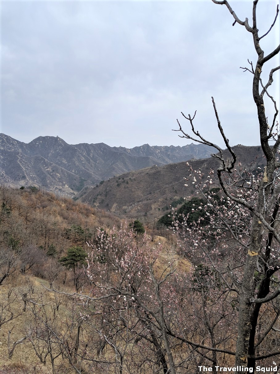 great wall of china hiking spring flowers