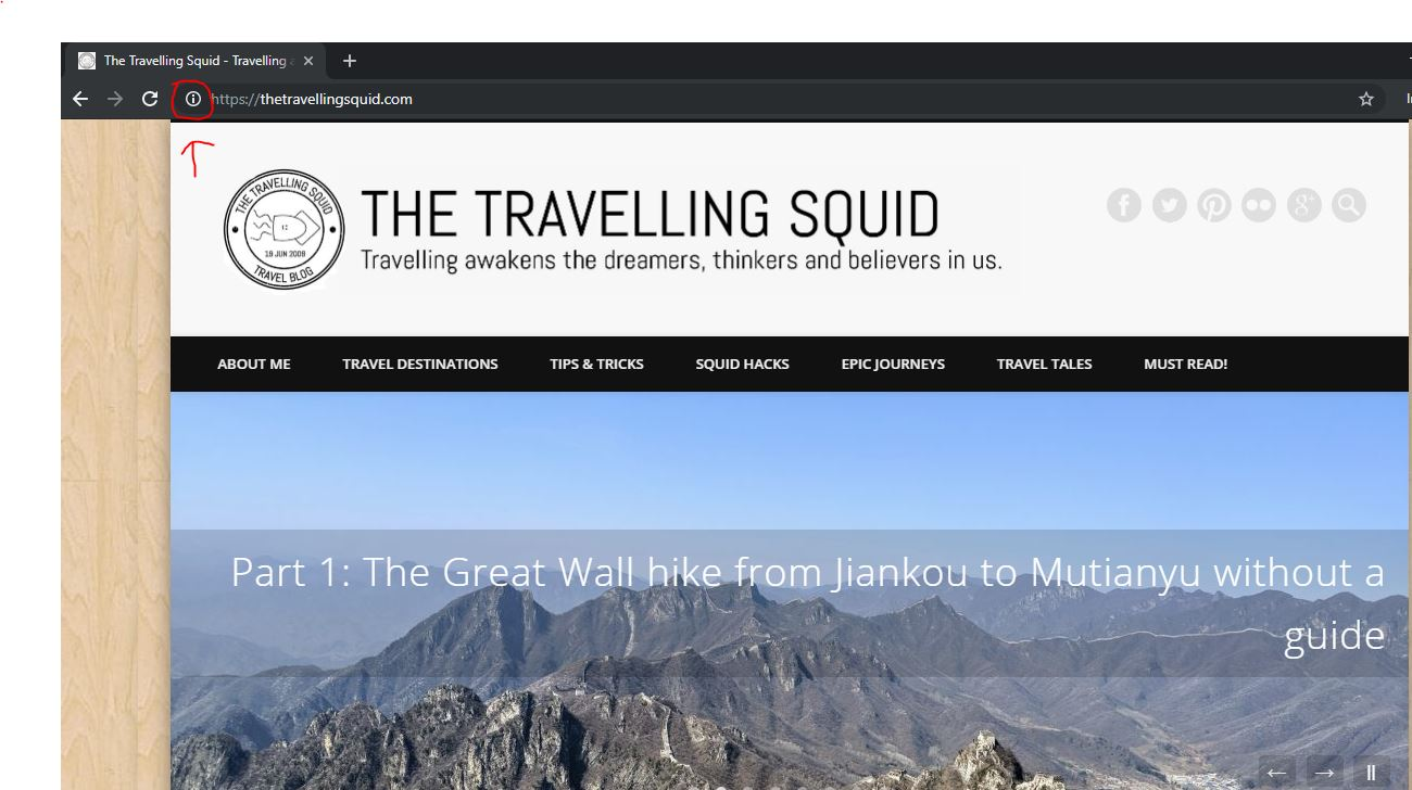 the travelling squid https