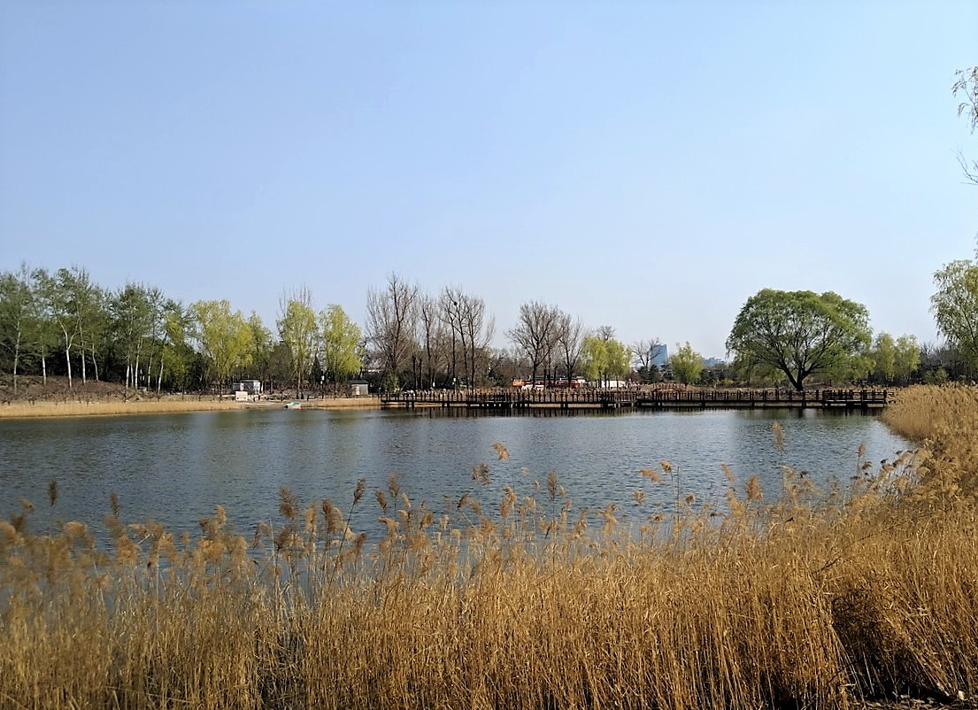 old summer palace beijing 圆明园