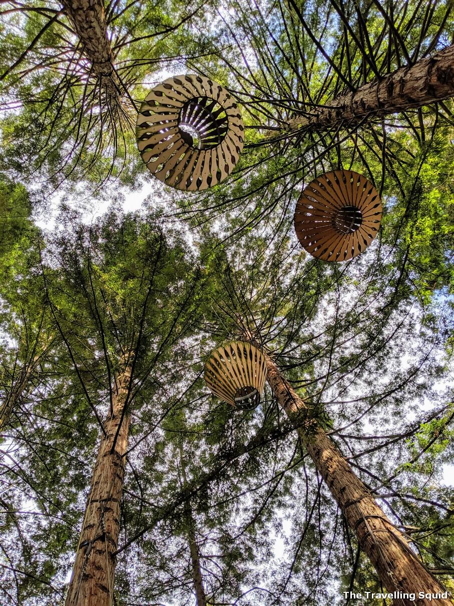 lanterns Redwoods and Whakarewarewa Forest in Rotorua