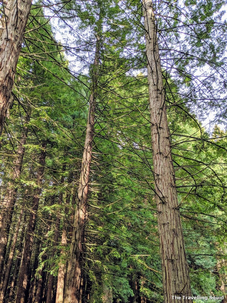redwoods rotorua new zealand