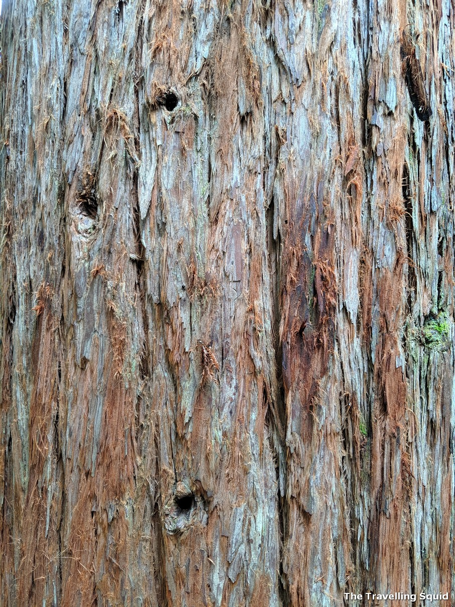 redwood california bark rotorua