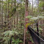 Is the treetop walk at the Redwoods and Whakarewarewa Forest in Rotorua worth it?