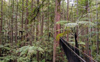 bridge redwood treetop walk rotorua