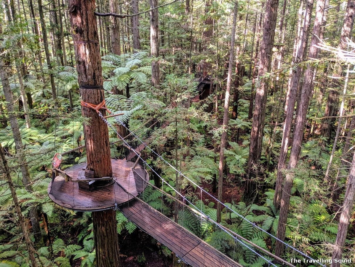 redwoods rotorua treetop walk