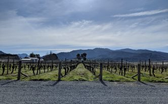 wairau river wines vineyard