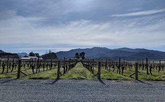 wairau river wines vineyard