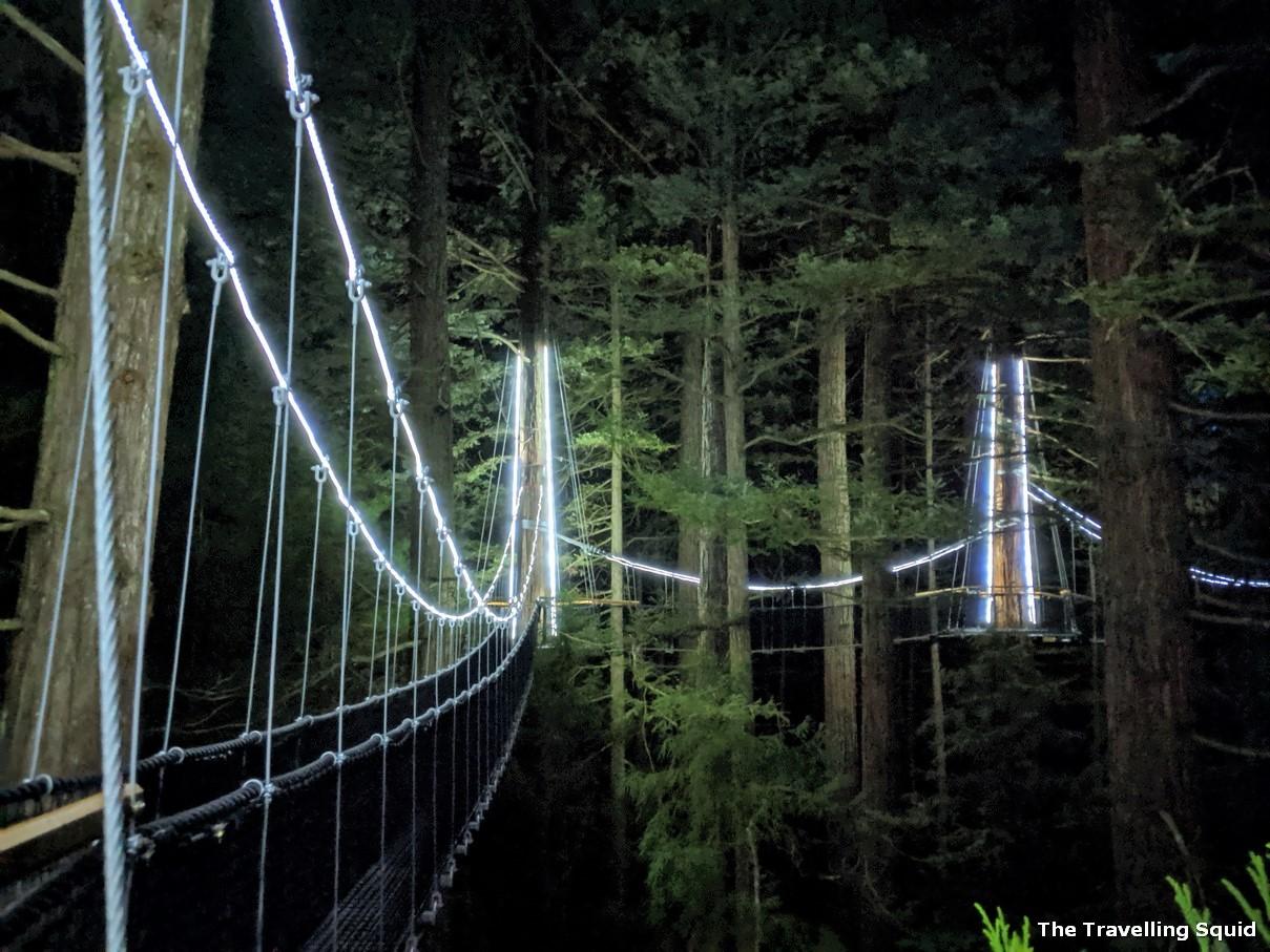 Whakarewarewa Forest in Rotorua at night