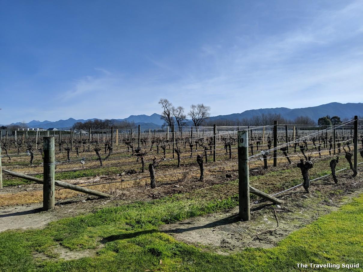 Cloudy Bay winery in Marlborough