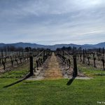 Recommended: Our visit to the Cloudy Bay winery in Marlborough