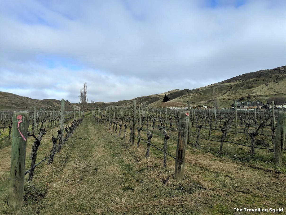 Felton Road vineyard in Bannockburn