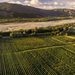 Review: The Hans Herzog winery in Marlborough New Zealand