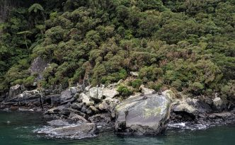 seals milford sound cruise fjord