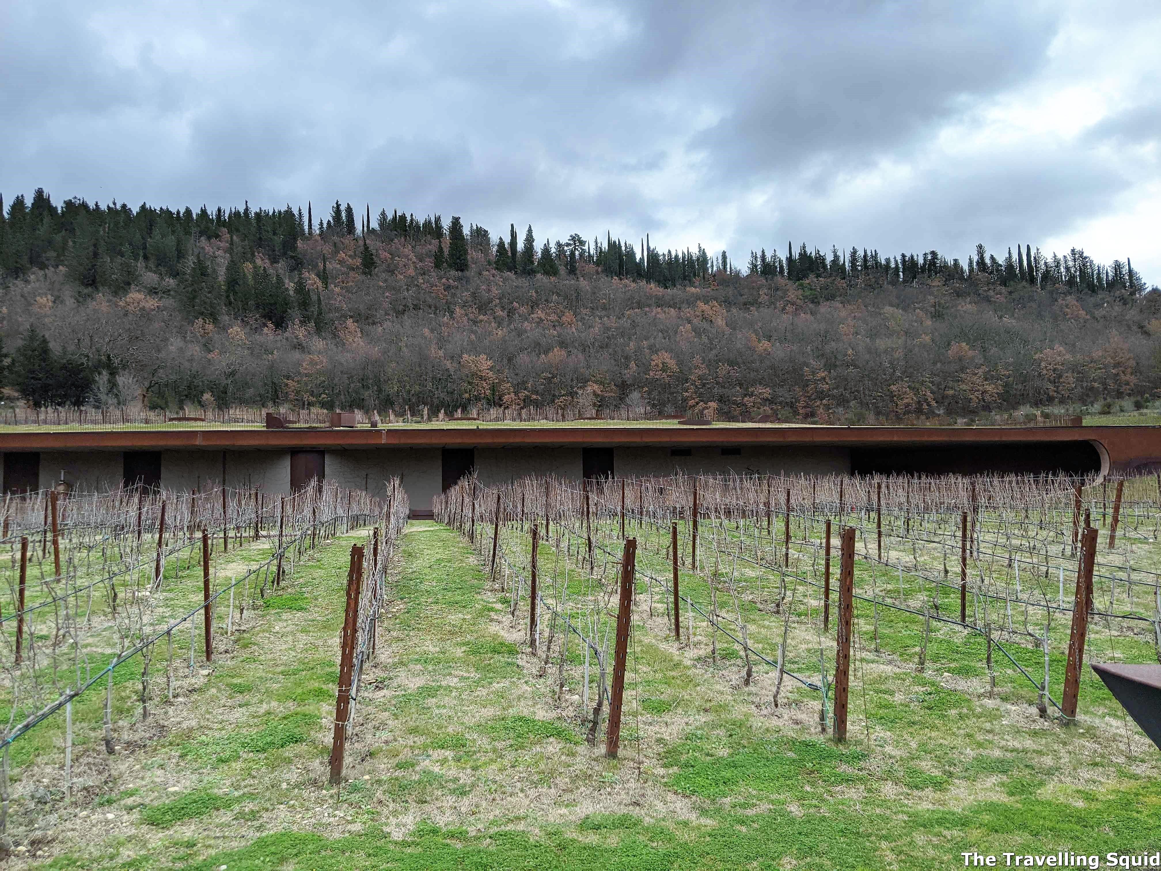 sangiovese grapes Antinori nel Chianti Classico
