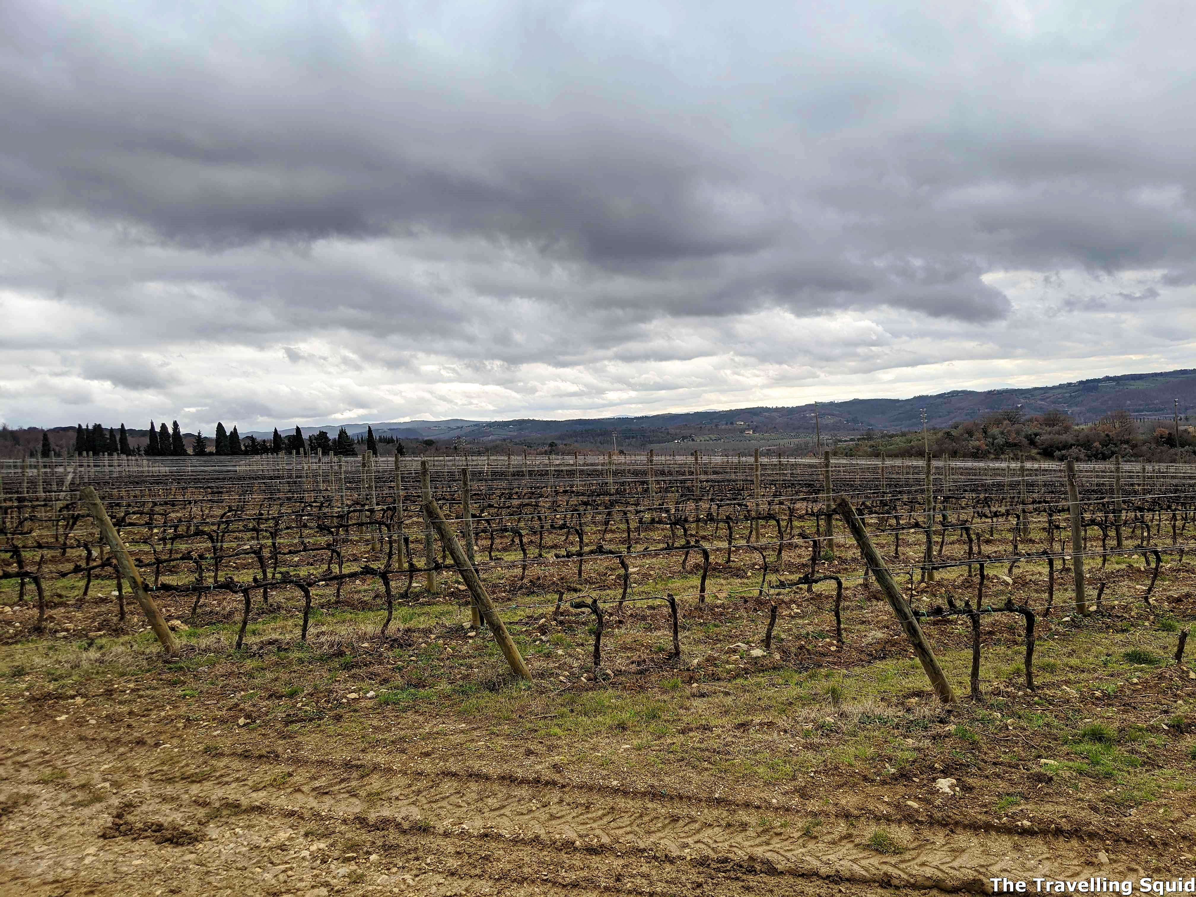 Tenuta Tignanello antinori vineyard