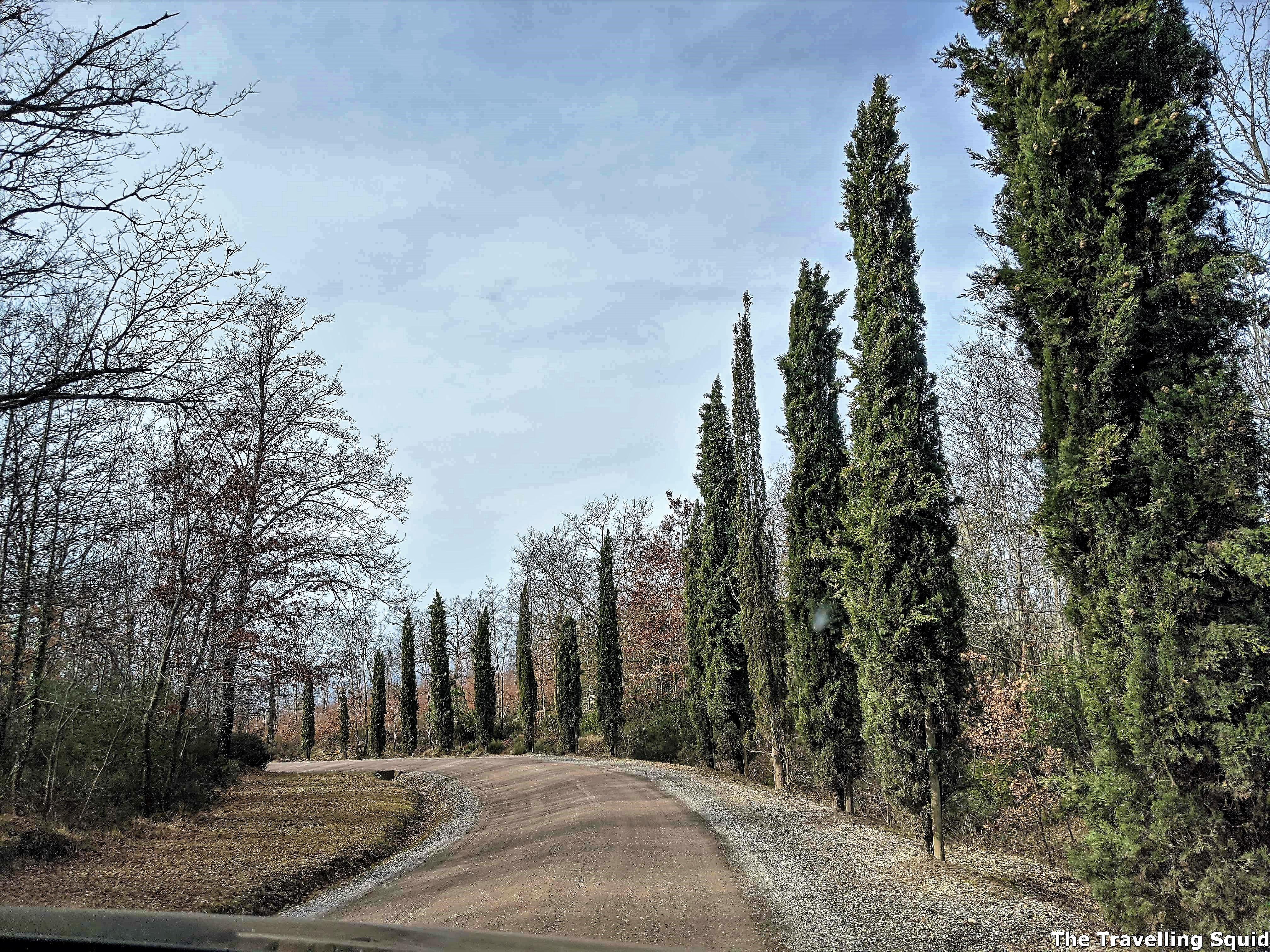 cypress Poggio Antico in Montalcino