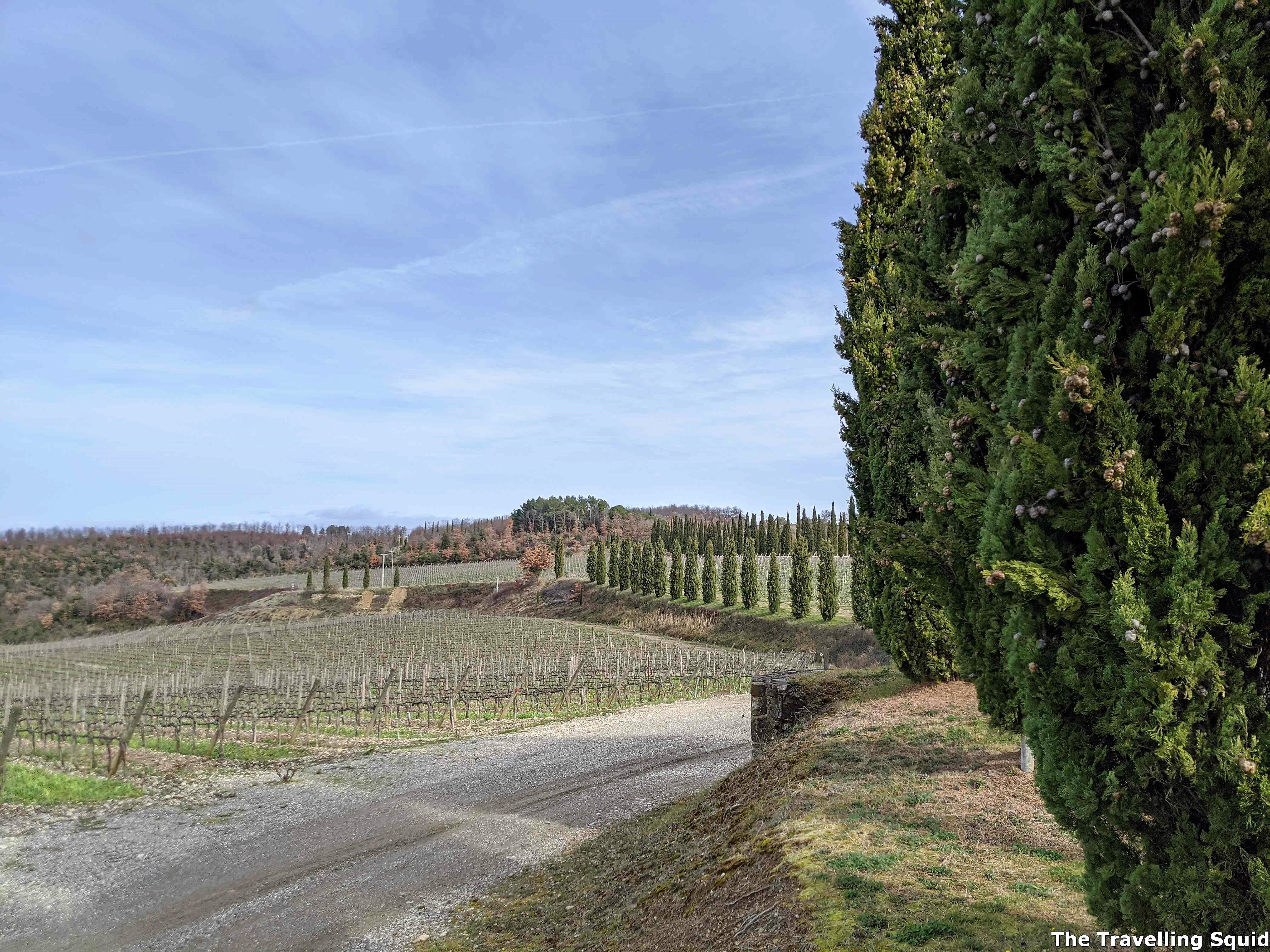 vineyards to visit in Montalcino Italy Poggio Antico